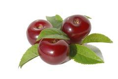 Tre Cherry royaltyfri foto