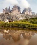Tre Cime Zinnen z krowami odzwierciedla w jeziorze lub Drei Zdjęcia Royalty Free