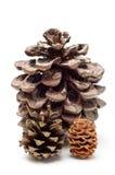 Tre coni del pino Fotografia Stock