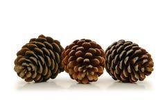Tre coni del pino Fotografie Stock