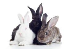Tre conigli Fotografia Stock