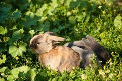 Tre conigli del bambino Fotografia Stock Libera da Diritti