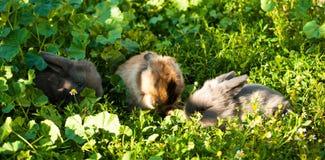 Tre conigli del bambino Immagine Stock