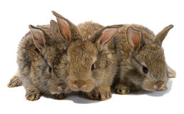 Tre conigli del bambino Fotografie Stock