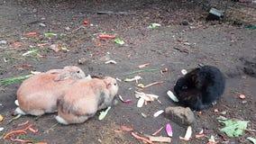 Tre conigli svegli che mangiano le verdure video d archivio