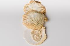 Tre coperture di pettine con la collana della perla Fotografia Stock Libera da Diritti