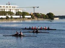 Tre coperture di rematura sul fiume Potomac Immagine Stock