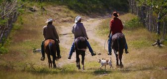 Tre cowboyer och en hund på en grusväg Fotografering för Bildbyråer