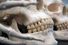 Tre crani con Boney Fingers Fotografie Stock