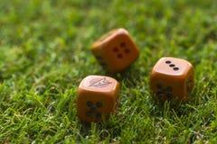 Tre cubi dei dadi sul fondo dell'erba Immagine Stock
