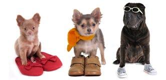 Tre cuccioli con calzature differenti isolate Immagini Stock Libere da Diritti
