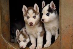 Tre cuccioli favoriti Immagini Stock