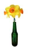 Tre Daffodils in una bottiglia verde Fotografia Stock