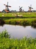 Tre dei mulini a vento olandesi, i Paesi Bassi Fotografie Stock Libere da Diritti