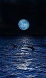 Tre delfini Fotografia Stock
