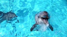 Tre delfini stock footage