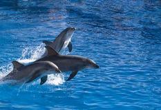 Tre delfini Fotografia Stock Libera da Diritti