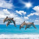 Tre delfini di salto Fotografia Stock