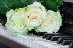 Tre delicatamente rose bianco verdi sulle chiavi del piano Immagini Stock