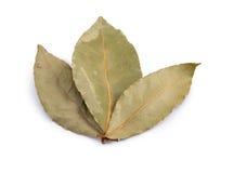 Tre delle foglie asciutte dell'alloro hanno sistemato come un fan su un fondo bianco Immagini Stock