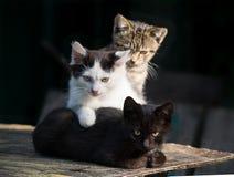 Tre di gattini colorati multi su un fondo scuro immagini stock