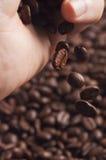 Tre dita che tengono il chicco di caffè con hanno offuscato altri fagioli sparsi dietro Immagini Stock