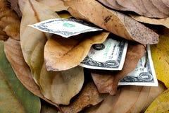 Tre dollarräkningar i hög av Autumn Leaves Arkivfoton