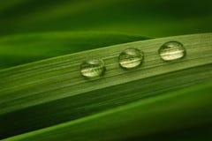Tre droppar av vatten på en grön leaf Fotografering för Bildbyråer