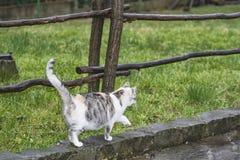 Tre-färg härlig katt Gullig grå katt som utomhus sitter på en träbänk En grå katt sitter på en träbänk nära huset arkivfoton