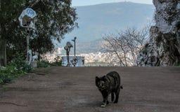 Tre-färgad katt som går på en gata, ögon som ser raka på kameraframdelen Övergiven kattunge på dess egna i Grekland, Aten royaltyfri bild