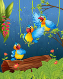 Tre färgrika papegojor Arkivbilder