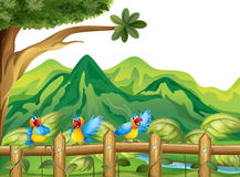 Tre färgrika papegojor Royaltyfria Foton