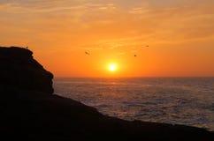 Tre fåglar på soluppgång Arkivfoto