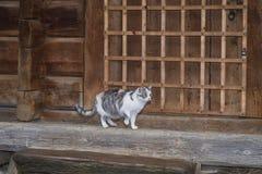 Tre-f?rg h?rlig katt Gullig gr? katt som utomhus sitter p? en tr?b?nk En gr? katt sitter p? en tr?b?nk n?ra royaltyfri fotografi