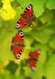 Tre farfalle Immagini Stock