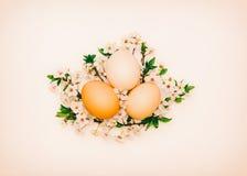 Tre fega ägg i blomning förgrena sig på en rosa bakgrund Royaltyfri Foto