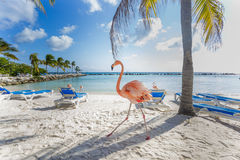 Tre fenicotteri sulla spiaggia Immagini Stock