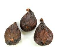 Tre fikonträd Royaltyfri Bild