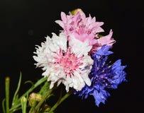 Tre fiori Fotografia Stock Libera da Diritti