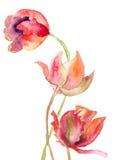 Tre fiori dei tulipani Immagini Stock Libere da Diritti