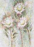 Tre fiori del protea Fotografie Stock