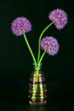 Tre fiori dell'allium in un vaso decorativo Fotografia Stock