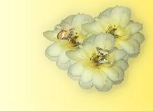 Tre fiori gialli della Rosa Immagini Stock