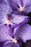 Tre fiori porpora dell'orchidea fotografie stock libere da diritti