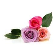 Tre fiori rosa immagine stock libera da diritti