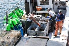 Tre fiskare som sorterar levande hummer på en fiskebåt i Maine Royaltyfri Fotografi
