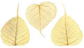 Tre fogli di autunno strutturati. Macro. Immagini Stock Libere da Diritti