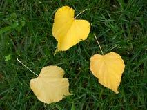 Tre fogli gialli Immagine Stock