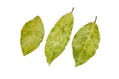 Tre foglie della baia Immagini Stock