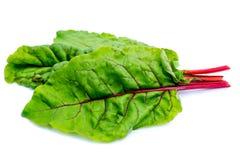 Tre foglie della bietola isolate su fondo bianco immagine stock libera da diritti